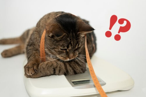 ネコちゃんと体重計