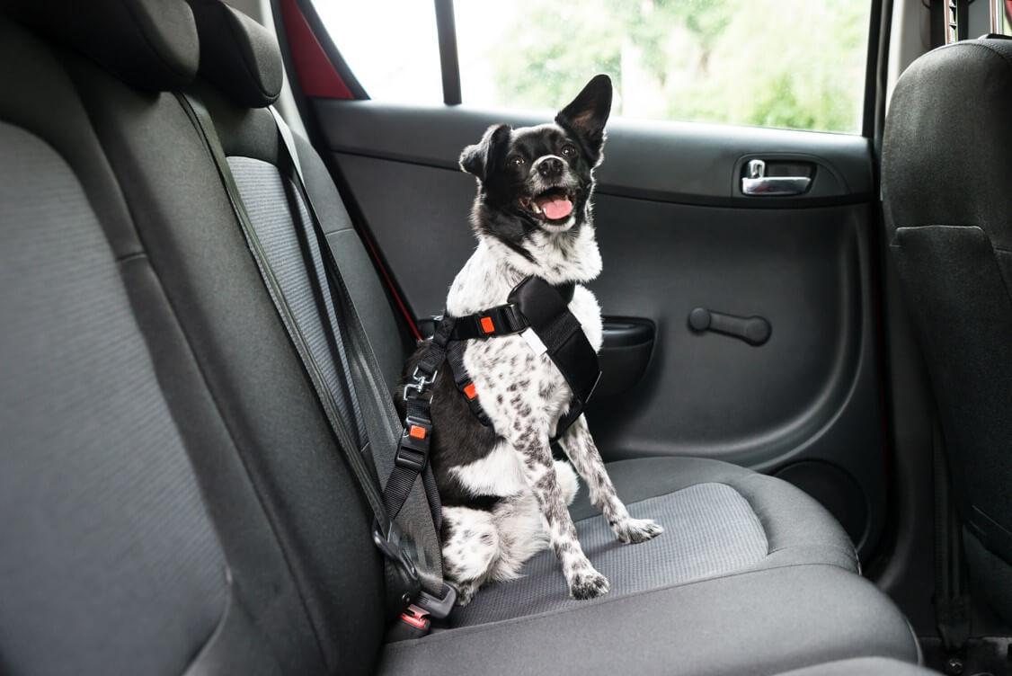 ワンちゃん用のシートベルト