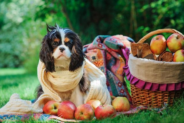 犬 腎臓 病 りんご