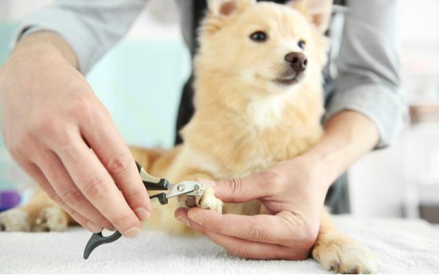 た 犬 の 爪 切り すぎ