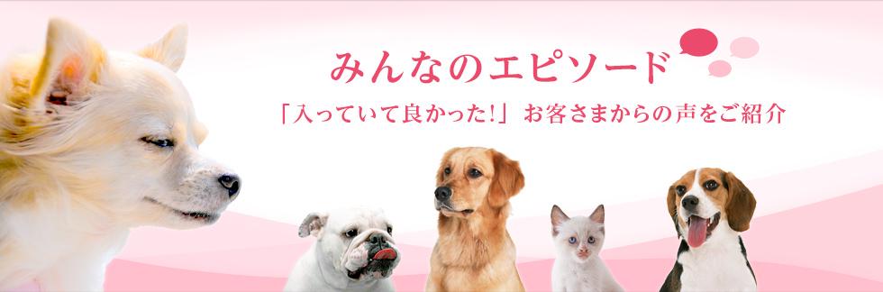数々のNo.1受賞のペット保険【ア...